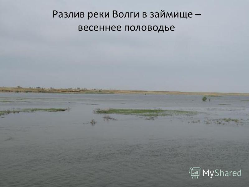 Разлив реки Волги в займище – весеннее половодье