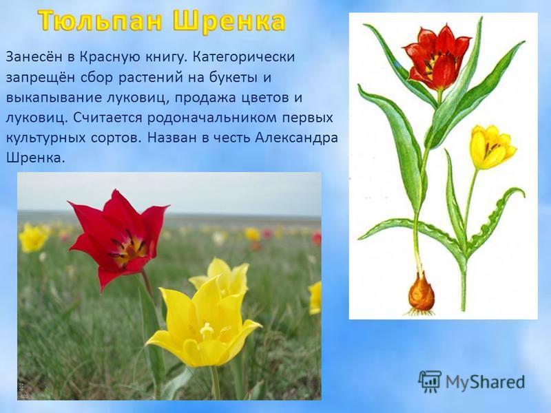 Книгу цветов которые занесены в красную