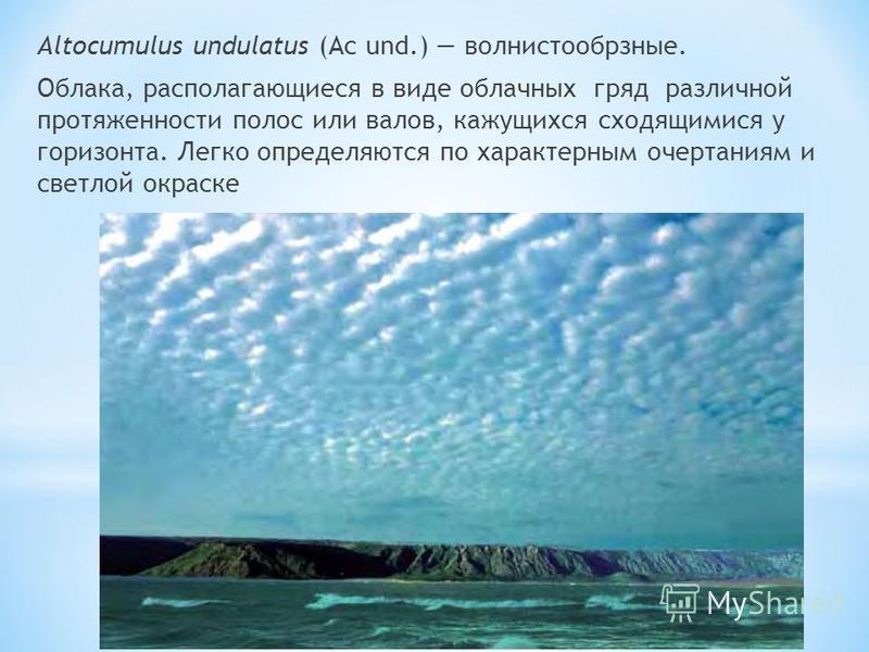Altocumulus undulatus (Ac und.) волнистообрзные. Облака, располагающиеся в виде облачных гряд различной протяженности полос или валов, кажущихся сходящимися у горизонта. Легко определяются по характерным очертаниям и светлой окраске