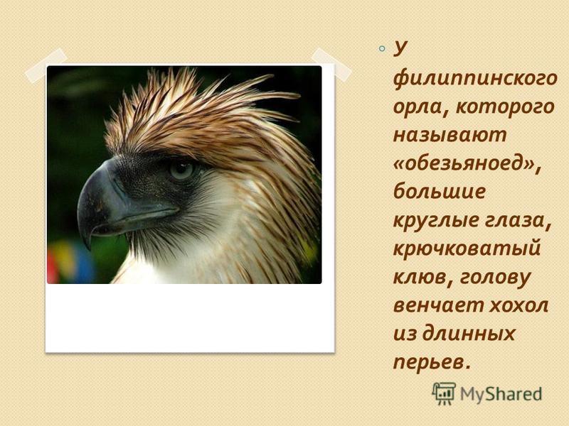 Необычная птица Обезьяноед