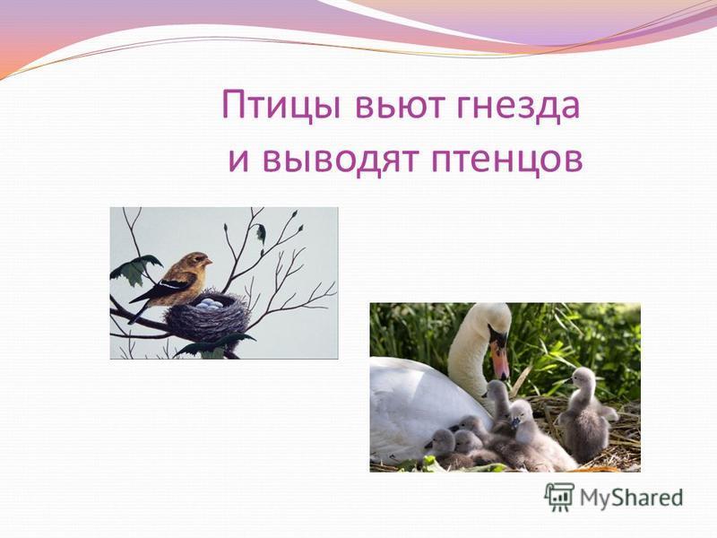 Птицы вьют гнезда и выводят птенцов
