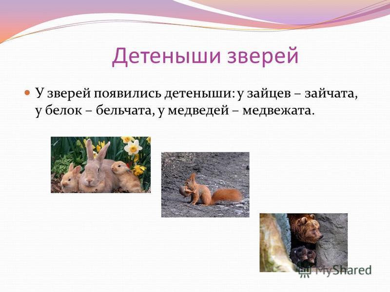 Детеныши зверей У зверей появились детеныши: у зайцев – зайчата, у белок – бельчата, у медведей – медвежата.