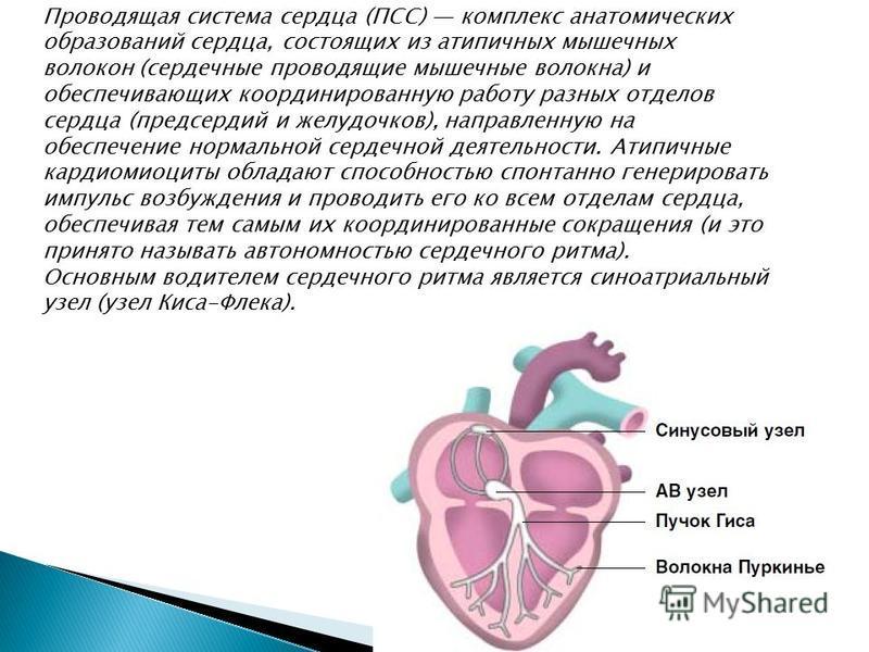 Проводящая система сесердца (ПСС) комплекс анатомических образований сесердца, состоящих из атипичных мышечных волокон (сердечные проводящие мышечные волокна) и обеспечивающих координированную работу разных отделов сесердца (предсердий и желудочков),