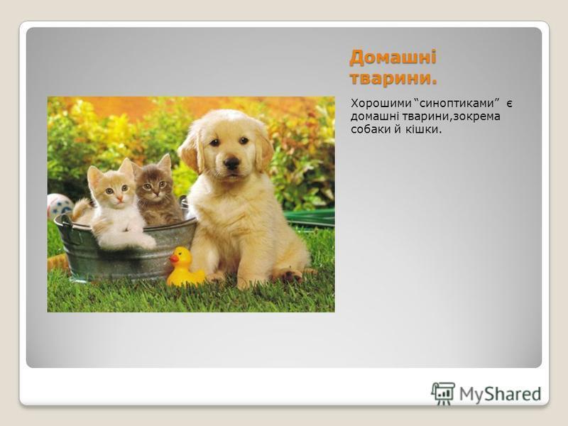 Домашні тварини. Хорошими синоптиками є домашні тварини,зокрема собаки й кішки.