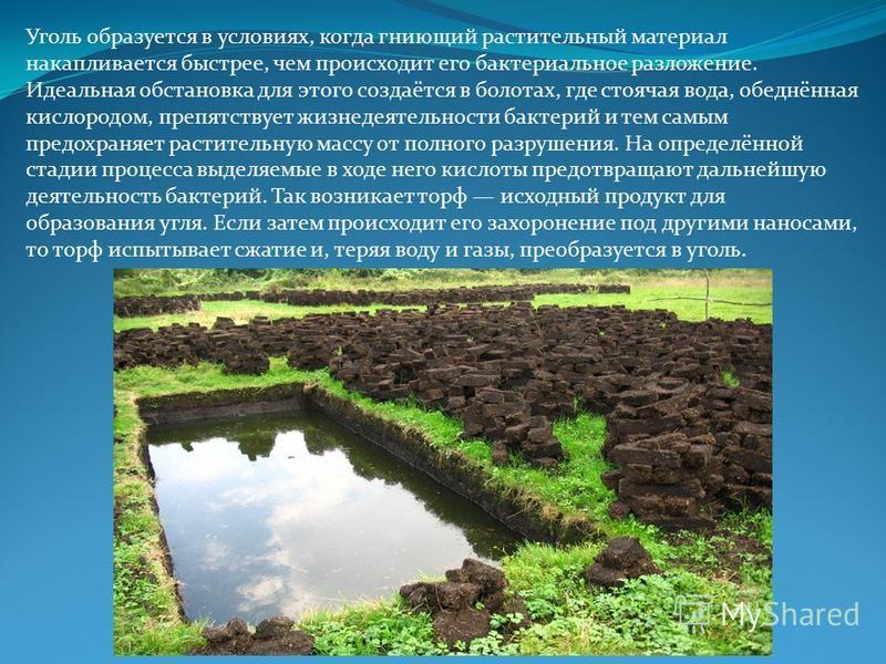 Уголь образуется в условиях, когда гниющий растительный материал накапливается быстрее, чем происходит его бактериальное разложение. Идеальная обстановка для этого создаётся в болотах, где стоячая вода, обеднённая кислородом, препятствует жизнедеятел