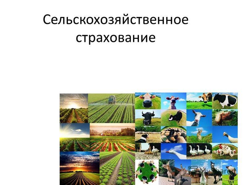Сельскохозяйственное страхование