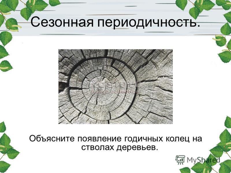 Сезонная периодичность. Объясните появление годичных колец на стволах деревьев.