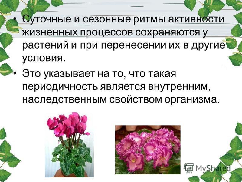 Суточные и сезонные ритмы активности жизненных процессов сохраняются у растений и при перенесении их в другие условия. Это указывает на то, что такая периодичность является внутренним, наследственным свойством организма.