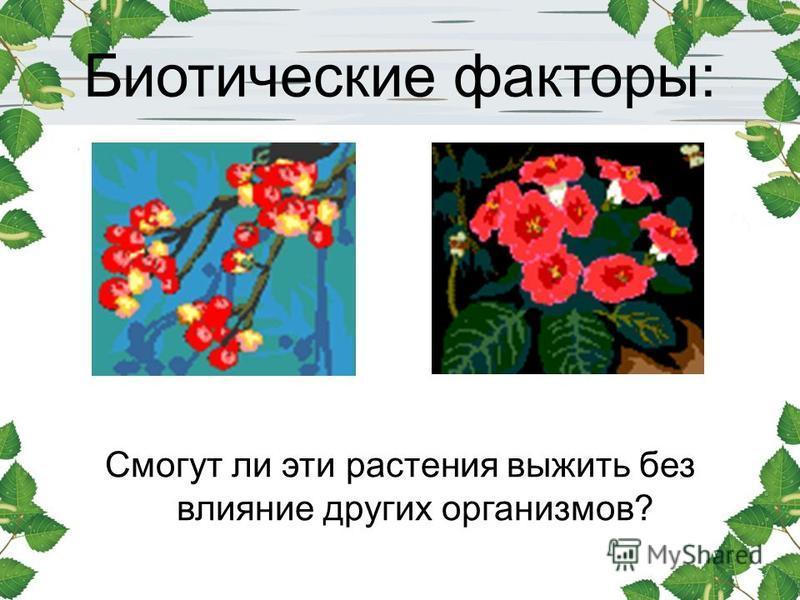 Биотические факторы: Смогут ли эти растения выжить без влияние других организмов?