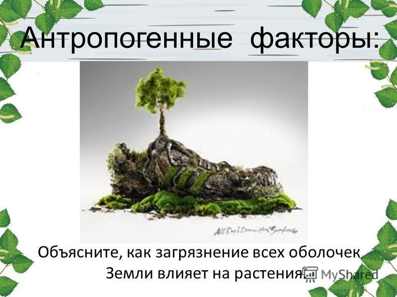 Антропогенные факторы: Объясните, как загрязнение всех оболочек Земли влияет на растения.
