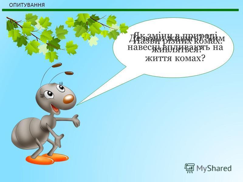 Як зміни в природі навесні впливають на життя комах? ОПИТУВАННЯ Назви різних комах. Де вони живуть? Чим живляться?