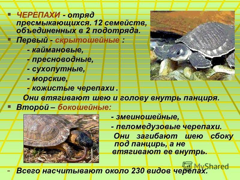 ЧЕРЕПАХИ - отряд пресмыкающихся. 12 семейств, объединенных в 2 подотряда. Первый - скрыто шейные : - каймановые, - пресноводные, - сухопутные, - морские, - кожистые черепахи. Они втягивают шею и голову внутрь панциря. Второй – бокошейные: - змеиношей