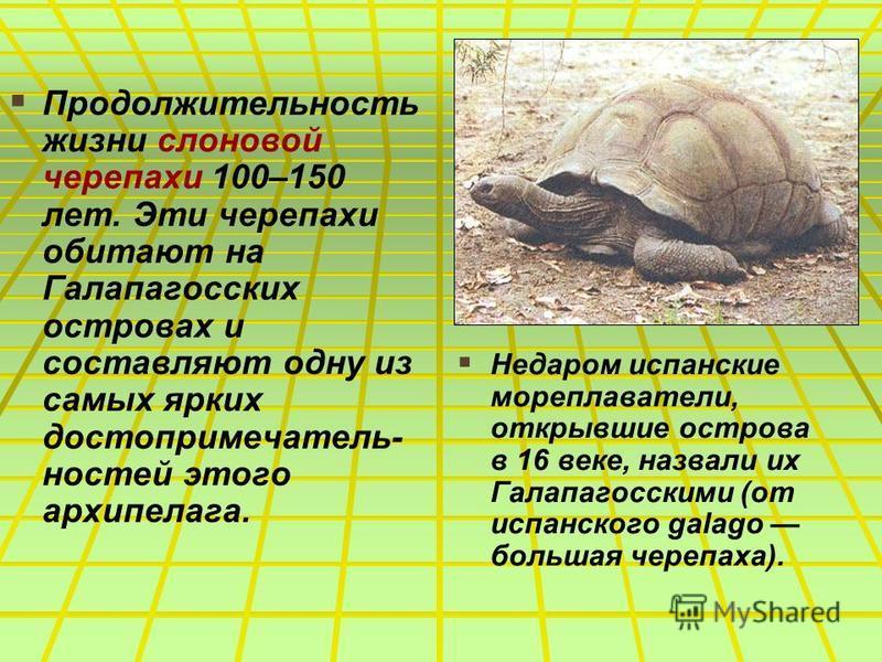 Продолжительность жизни слоновой черепахи 100–150 лет. Эти черепахи обитают на Галапагосских островах и составляют одну из самых ярких достопримечательностей этого архипелага. Недаром испанские мореплаватели, открывшие острова в 16 веке, назвали их Г