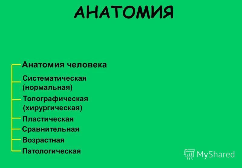Анатомия человека Топографическая (хирургическая) Систематическая (нормальная) Пластическая Сравнительная Возрастная Патологическая АНАТОМИЯ