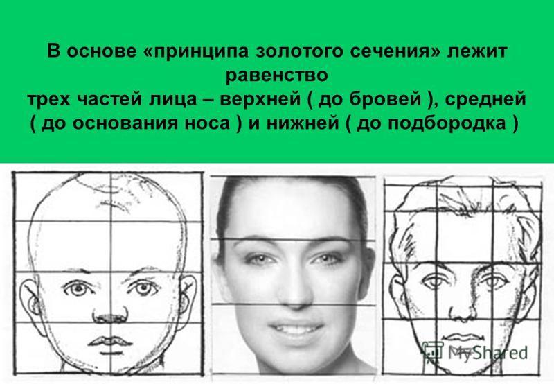 В основе «принципа золотого сечения» лежит равенство трех частей лица – верхней ( до бровей ), средней ( до основания носа ) и нижней ( до подбородка )