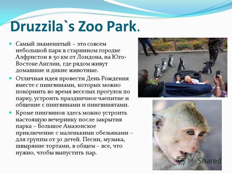 Druzzila`s Zoo Park. Самый знаменитый – это совсем небольшой парк в старинном городке Алфристон в 50 км от Лондона, на Юго- Востоке Англии, где рядом живут домашние и дикие животные. Отличная идея провести День Рождения вместе с пингвинами, которых м