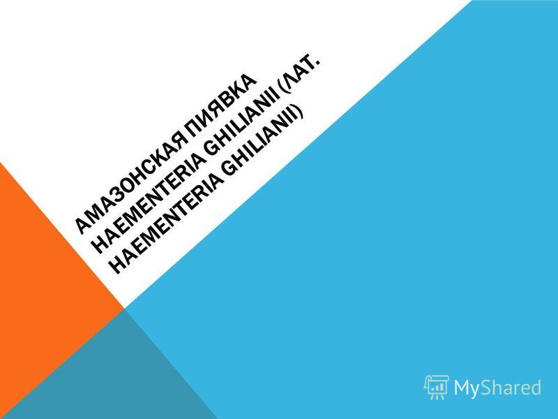 АМАЗОНСКАЯ ПИЯВКА HAEMENTERIA GHILIANII (ЛАТ. HAEMENTERIA GHILIANII)