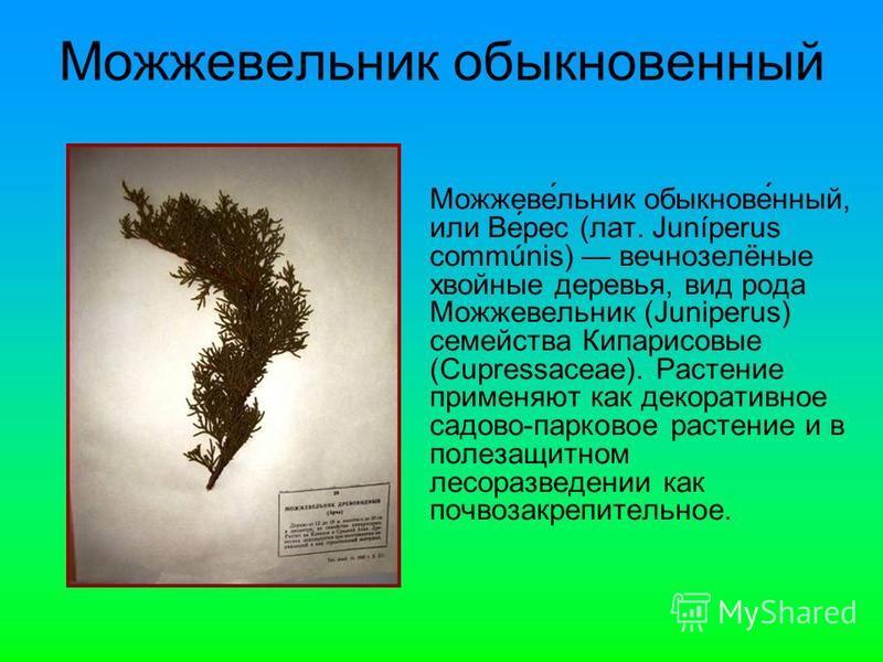 Можжеве́еельник обыкнове́нный, или Ве́рейс (лат. Juníperus commúnis) вечнозелёные хвойные деревья, вид рода Можжевееельник (Juniperus) семейства Кипарисовые (Cupressaceae). Растение применяют как декоративное садово-парковое растение и в полезащитном