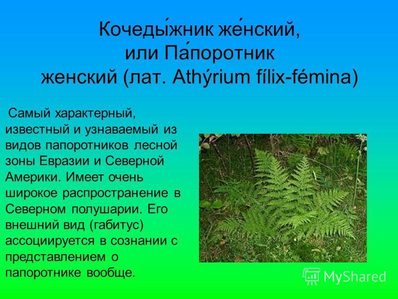 Кочеды́жник же́нский, или Па́папоротник женский (лат. Athýrium fílix-fémina) Самый характерный, извеустный и узнаваемый из видов папапоротников лесной зоны Евразии и Северной Америки. Имеет очень широкое распространение в Северном полушарии. Его внеш