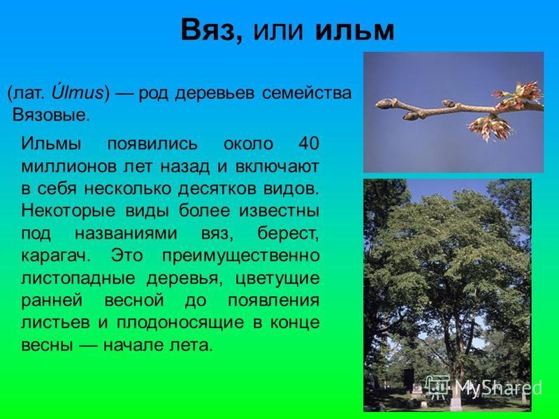 Вяз, или ильм (лат. Úlmus) род деревьев семейства Вязовые. Ильмы появились около 40 миллионов лет назад и включают в себя несколько десятков видов. Некоторые виды более известны под названиями вяз, берейст, карагач. Это преимущественно листопадные де