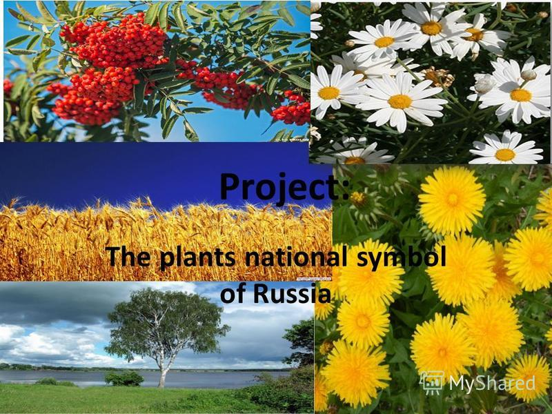 Project: The plants national symbol of Russia