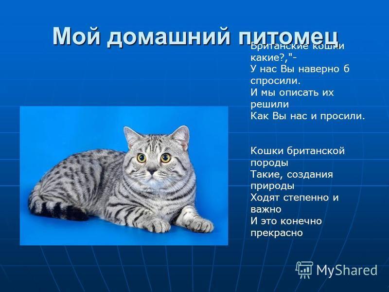 Британские кошки какие?,- У нас Вы наверно б спросили. И мы описать их решили Как Вы нас и просили. Кошки британской породы Такие, создания природы Ходят степенно и важно И это конечно прекрасно Мой домашний питомец