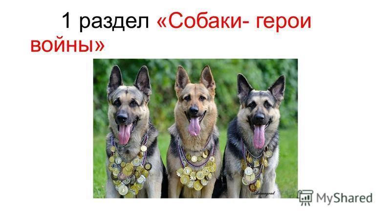 1 раздел «Собаки- герои войны»