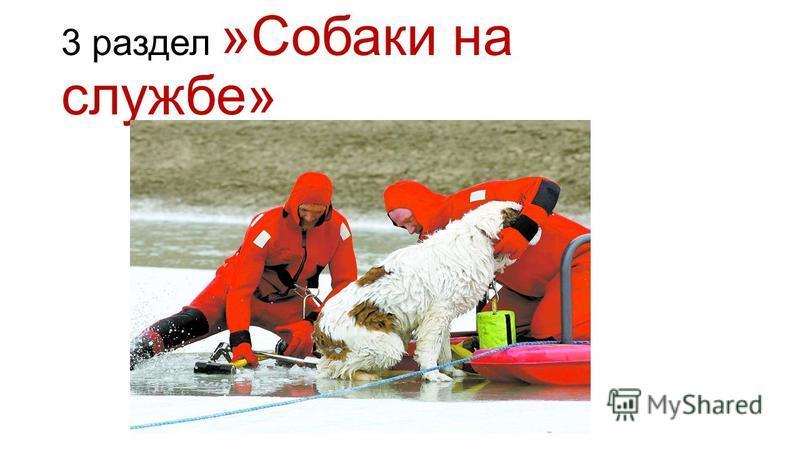 3 раздел »Собаки на службе»