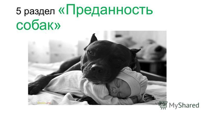 5 раздел «Преданность собак»