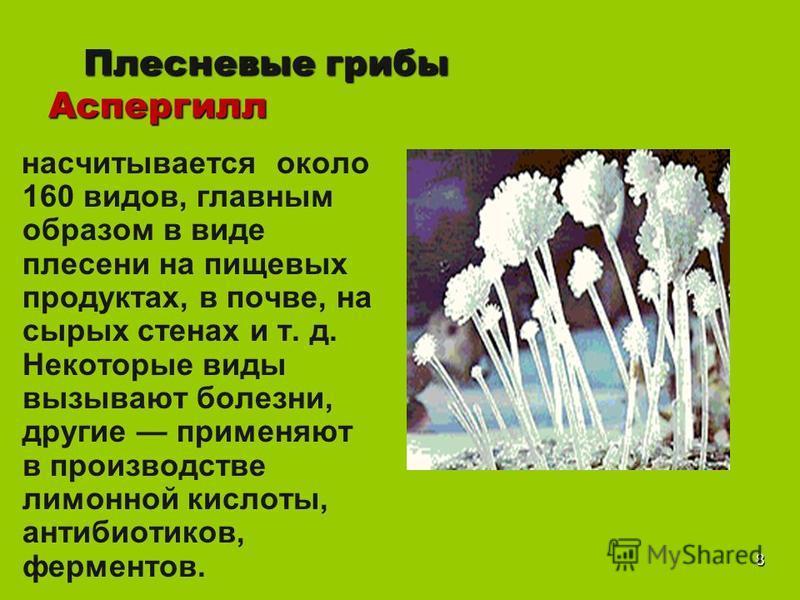 8 Плесневые грибы Аспергилл Плесневые грибы Аспергилл насчитывается около 160 видов, главным образом в виде плесени на пищевых продуктах, в почве, на сырых стенах и т. д. Некоторые виды вызывают болезни, другие применяют в производстве лимонной кисло