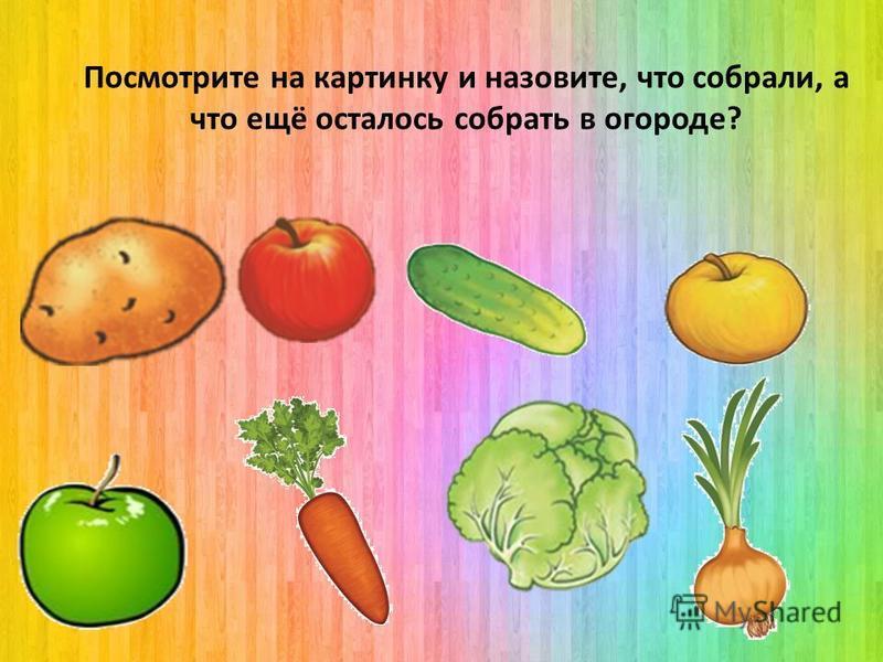 Помогите маме собрать капусту. Сколько она капусты собрала? 2