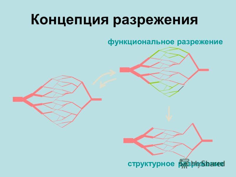 Концепция разрежения структурное разрежение функциональное разрежение