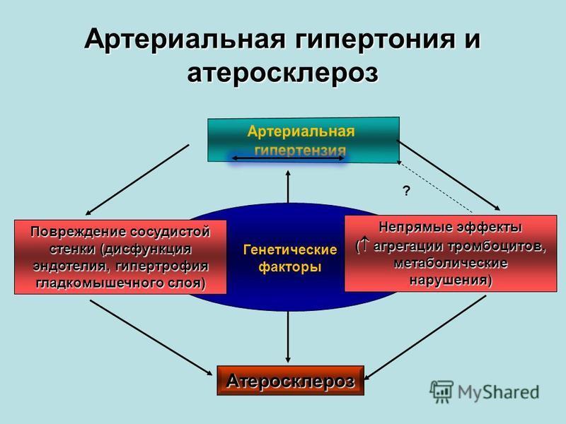 Артериальная гипертония и атеросклероз Повреждение сосудистой стенки (дисфункция эндотелия, гипертрофия гладкомышечного слоя) Непрямые эффекты ( агрегации тромбоцитов, метаболические нарушения) Атеросклероз ? Генетические факторы