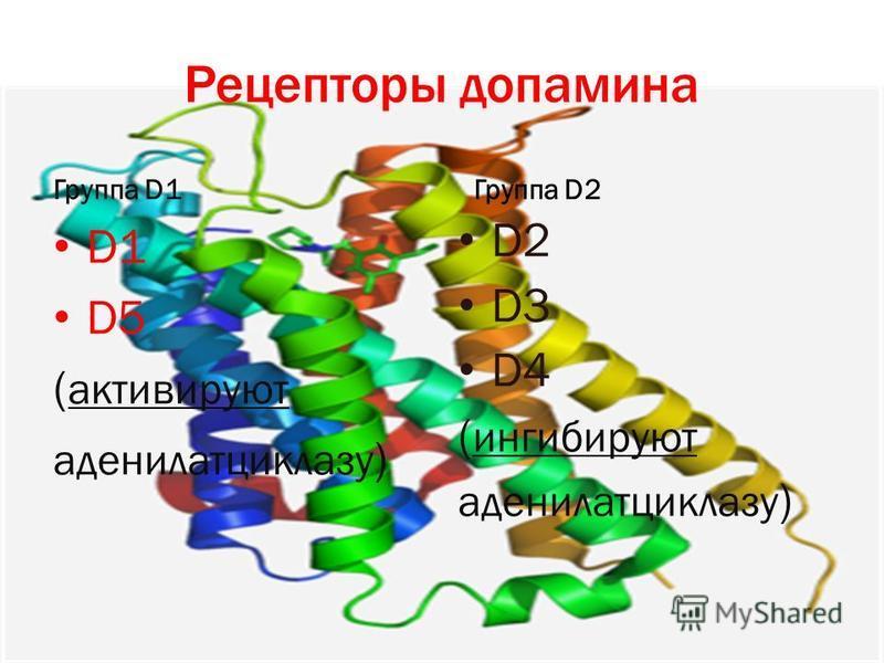 Рецепторы дофамина Группа D1 D1 D5 ( активируют аденилатциклазу ) Группа D2 D2 D3 D4 ( ингибируют аденилатциклазу )