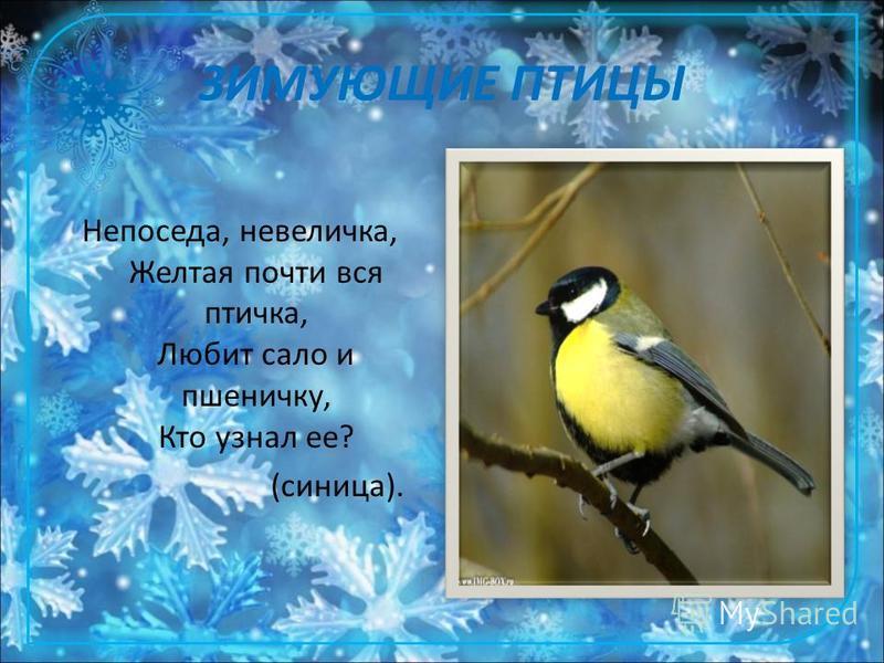 ЗИМУЮЩИЕ ПТИЦЫ Непоседа, невеличка, Желтая почти вся птичка, Любит сало и пшеничку, Кто узнал ее? (синица).
