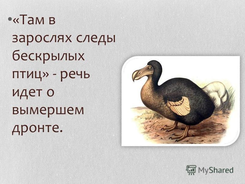 «Там в зарослях следы бескрылых птиц» - речь идет о вымершем дронте.