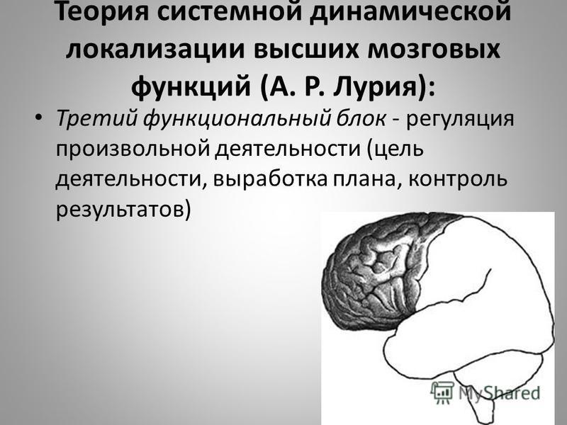 Теория системной динамической локализации высших мозговых функций (А. Р. Лурия): Третий функциональный блок - регуляция произвольной деятельности (цель деятельности, выработка плана, контроль результатов)