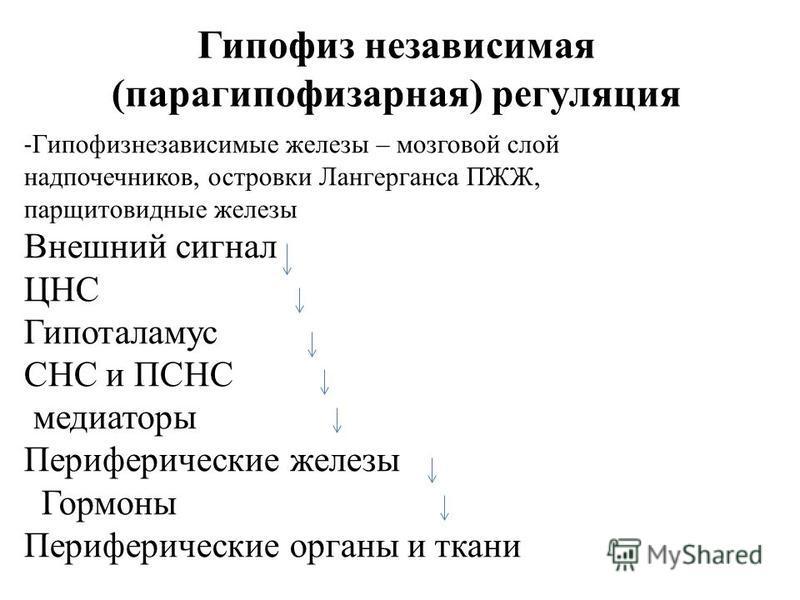 Гипофиз независимая (пара гипофизарная) регуляция - Гипофизнезависимые железы – мозговой слой надпочечников, островки Лангерганса ПЖЖ, паращитовидные железы Внешний сигнал ЦНС Гипоталамус СНС и ПСНС медиаторы Периферические железы Гормоны Периферичес