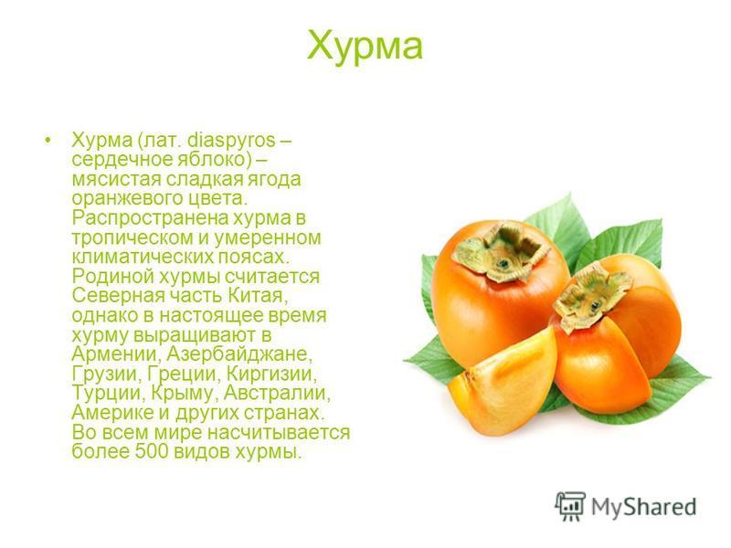 Хурма (лат. diaspyros – сердечное яблоко) – мясистая сладкая ягода оранжевого цвета. Распространена хурма в тропическом и умеренном климатических поясах. Родиной хурмы считается Северная часть Китая, однако в настоящее время хурму выращивают в Армени