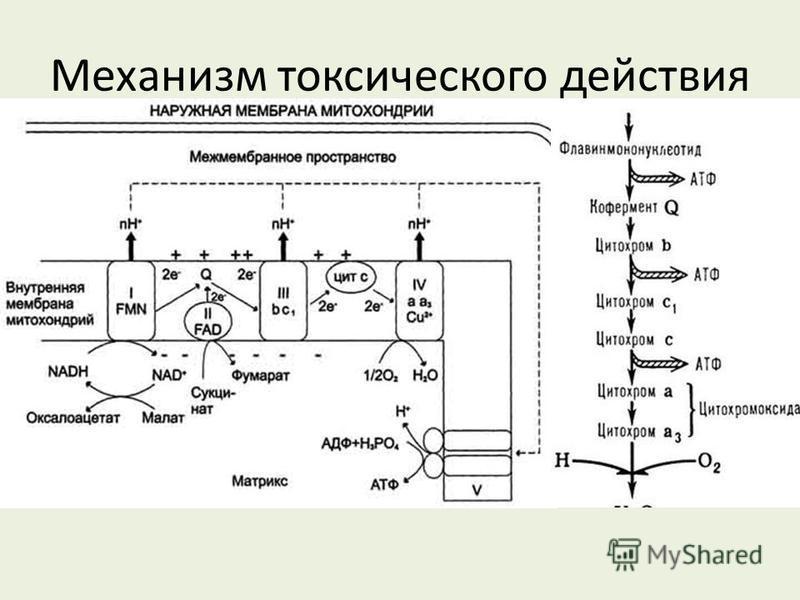 Механизм токсического действия