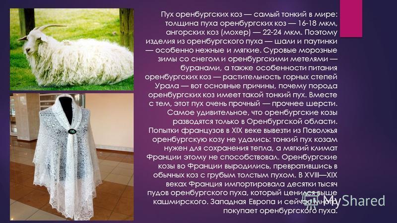 Пух оренбургских коз самый тонкий в мире: толщина пуха оренбургских коз 16-18 мкм, ангорских коз (мохер) 22-24 мкм. Поэтому изделия из оренбургского пуха шали и паутинки особенно нежные и мягкие. Суровые морозные зимы со снегом и оренбургскими метеля