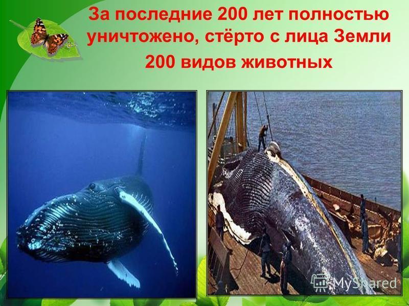 За последние 200 лет полностью уничтожено, стёрто с лица Земли 200 видов животных