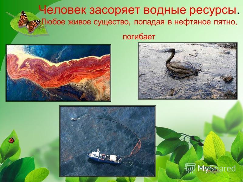 Человек засоряет водные ресурсы. Любое живое существо, попадая в нефтяное пятно, погибает