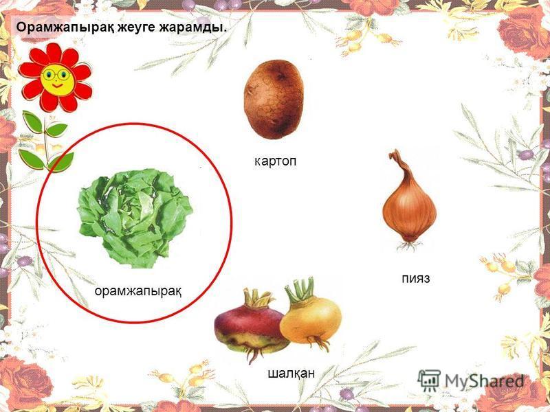Қай өсімдіктің жапырағы жеуге жарамды? картоп пияз орамжапырақ шалқан