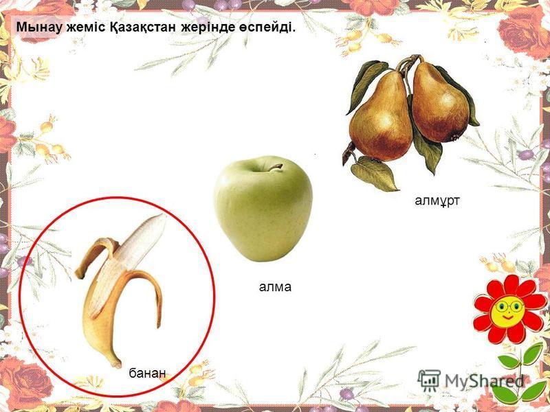 Қай жеміс Қазақстан жерінде өспейді? банан алма алмұрт