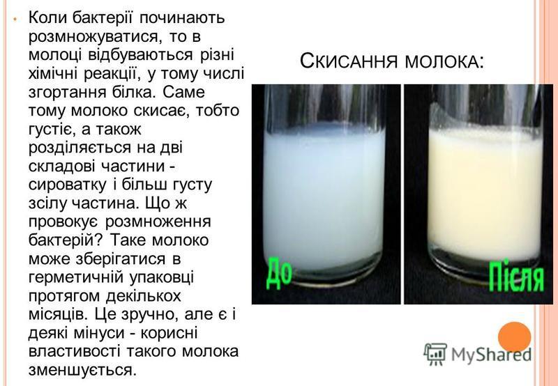 С КИСАННЯ МОЛОКА : Коли бактерії починають розмножуватися, то в молоці відбуваються різні хімічні реакції, у тому числі згортання білка. Саме тому молоко скисає, тобто густіє, а також розділяється на дві складові частини - сироватку і більш густу зсі