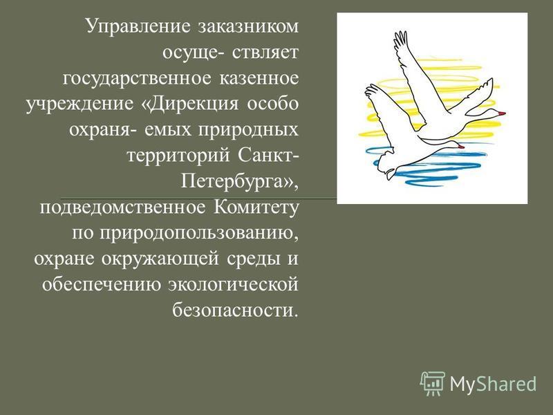 Управление заказником осуществляет государственное казенное учреждение «Дирекция особо охраняемых природных территорий Санкт- Петербурга», подведомственное Комитету по природопользованию, охране окружающей среды и обеспечению экологической безопаснос