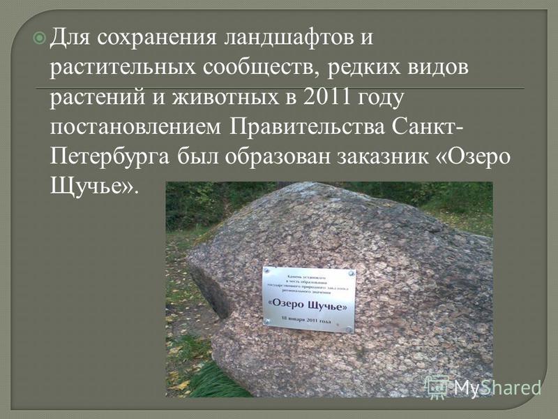 Для сохранения ландшафтов и растительных сообществ, редких видов растений и животных в 2011 году постановлением Правительства Санкт- Петербурга был образован заказник «Озеро Щучье».