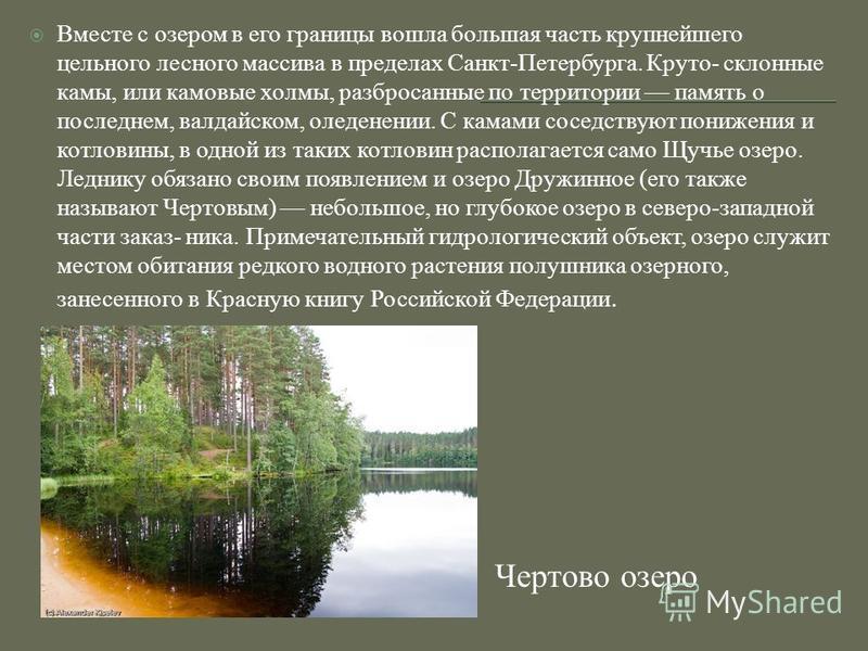 Чертово озеро Вместе с озером в его границы вошла большая часть крупнейшего цельного лесного массива в пределах Санкт-Петербурга. Круто- склонные камы, или камовые холмы, разбросанные по территории память о последнем, валдайском, оледенении. С камами