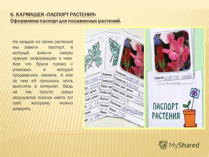 На каждое из своих растений мы завели паспорт, в который внесли самую нужную информацию о нем. Кое что брали прямо с упаковки, в которой продавались семена. А кое за чем ей пришлось лезть выяснять в интернет.. Ведь не так просто среди результатов пои